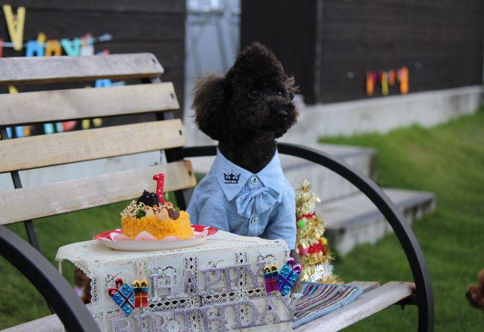 Happy Birthday ♪♪ トト呂君☆ ~賑やかな午後~