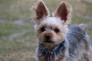 dogPhoto3