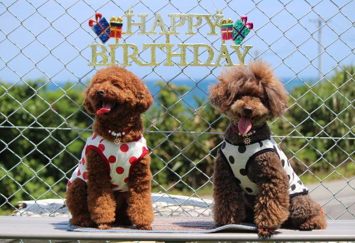 Happy Birthday♪♪