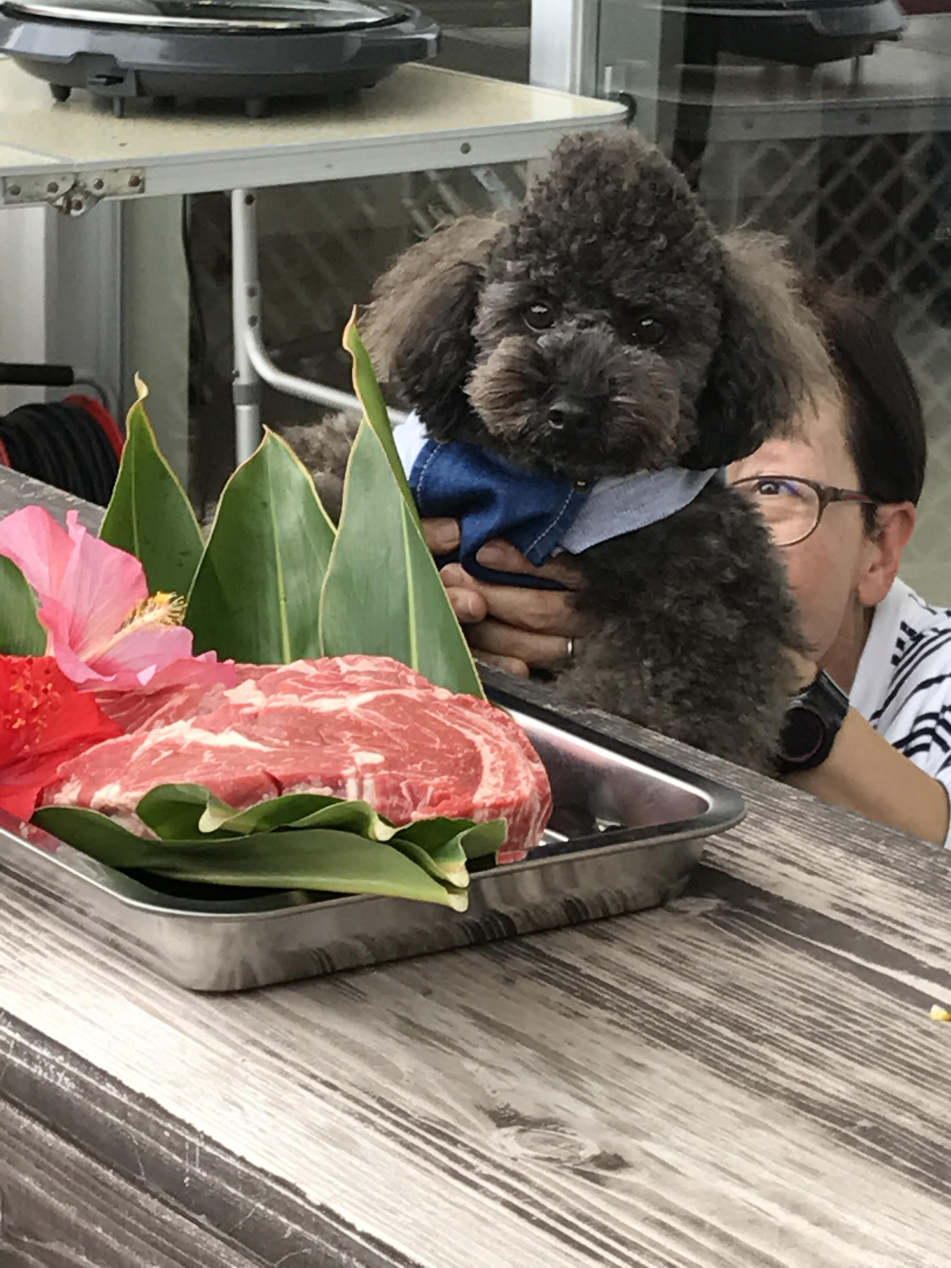 大きなお肉におめめパリクリ!!