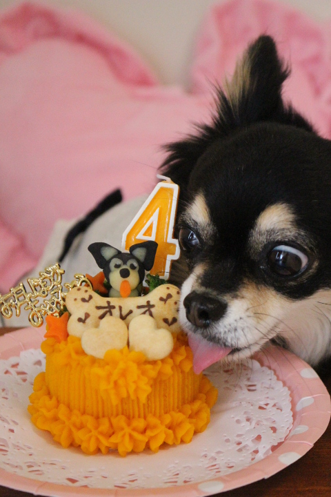 Happy Birthday ♪♪ オレオちゃん☆