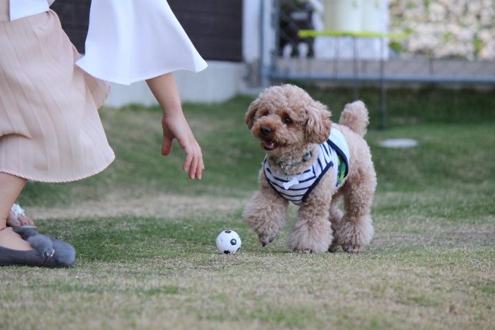 それぞれのボール遊び♪♪