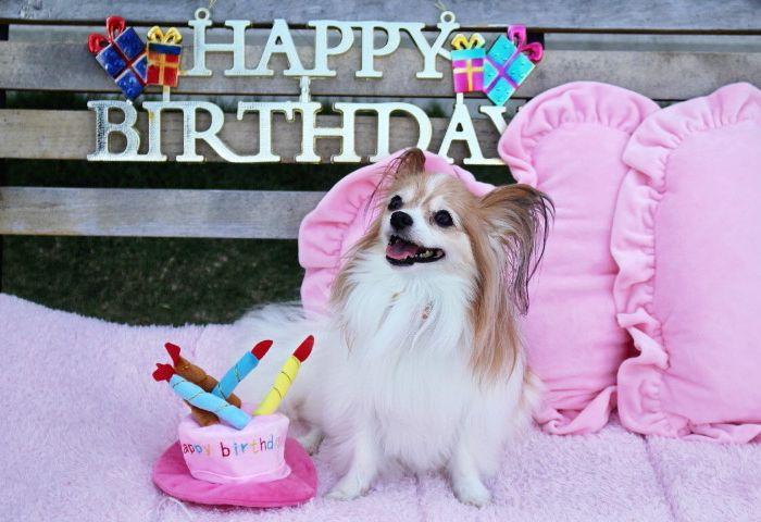 Happy Birthday ♪♪ 小梅ちゃん☆