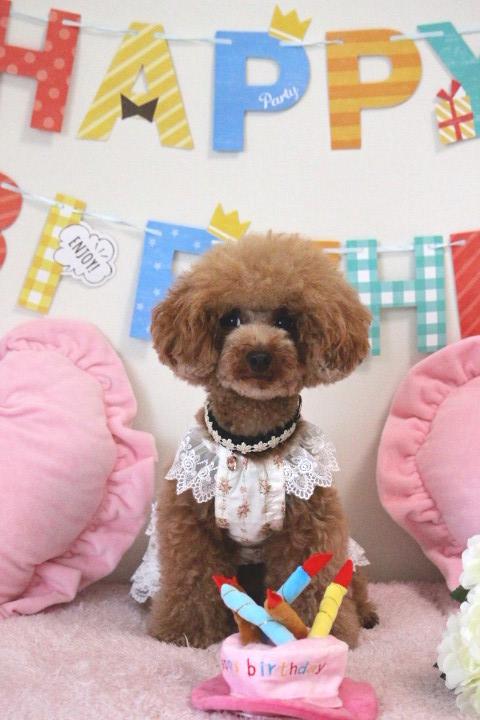 Happy Birthday ♪♪ にこちゃん☆