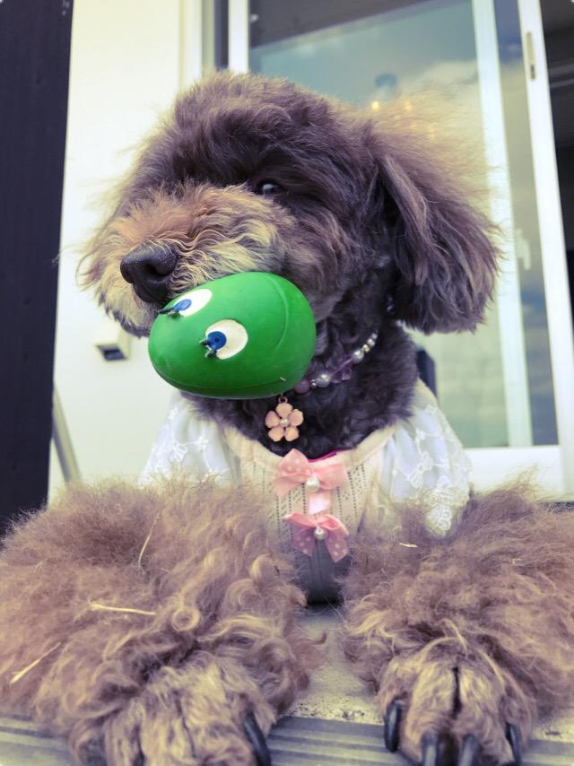 7月8日(土)わんちゃんと一緒に納涼会♪♪ 予約受付終了しました!!