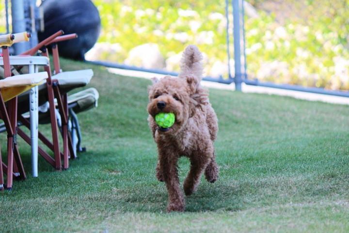 大好きなボール遊び