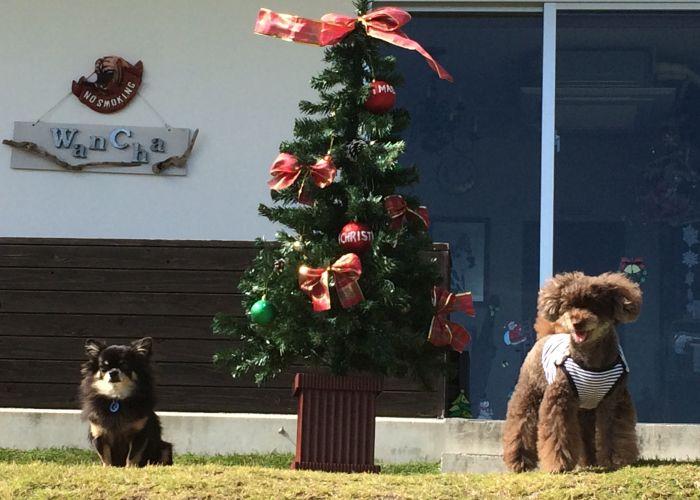12月9日(土)の「わんちゃんと一緒にクリスマスランチ♪♪」満席となりました♪♪