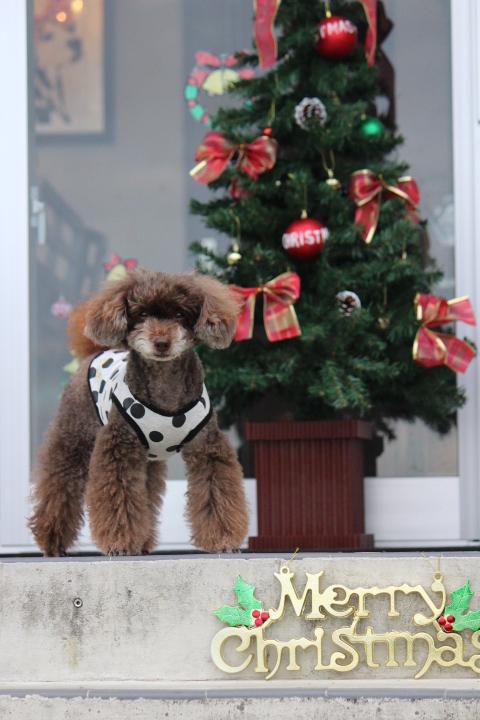 今年もやります!!わんちゃんと一緒にクリスマスランチ♪♪