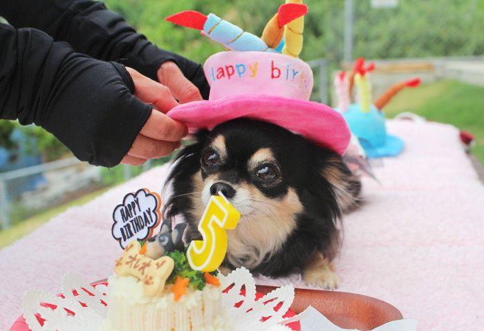 Happy Birthday♪♪ オレオちゃん☆