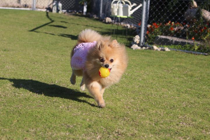 ボール遊びを楽しむペコちゃん