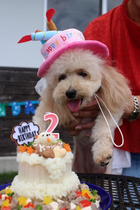 わぁ~い♪♪私のケーキ??_1