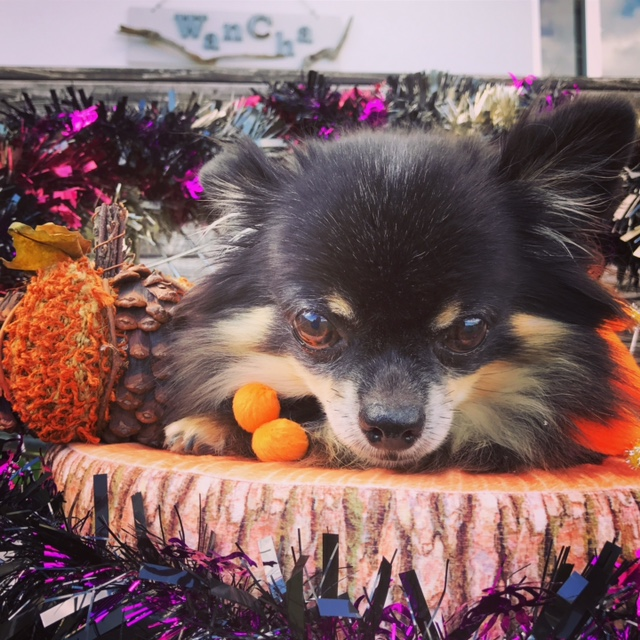 ★Happy Halloween★