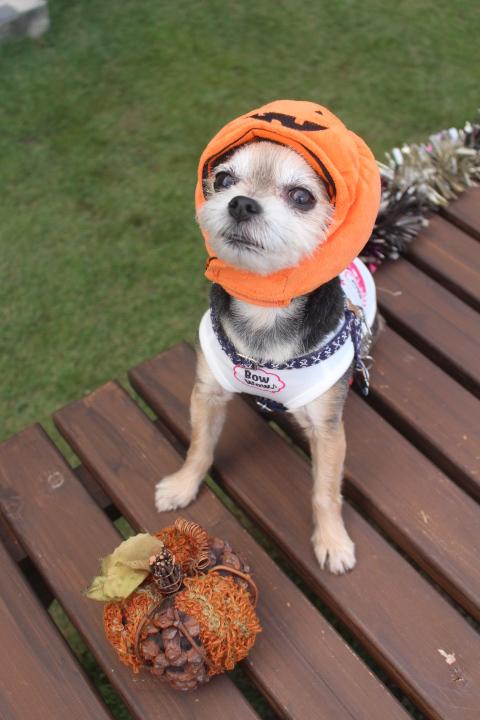 かぼちゃとかぼちゃ☆ベルちゃん
