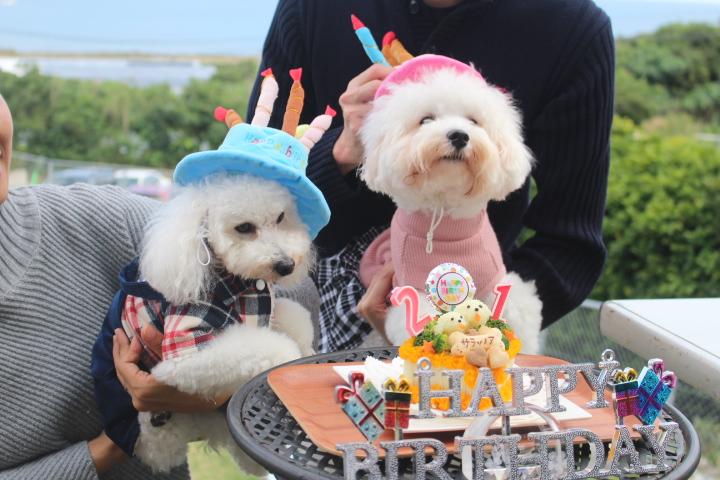2月23日ノアちゃんお誕生日おめでとぉ~☆