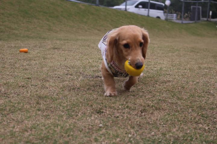 ころもちゃんボール遊び♪♪