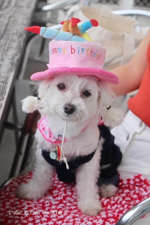 お誕生日おめでとう②お帽子も平気♪♪_1