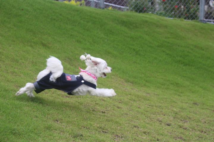 もう少しで飛行犬!!