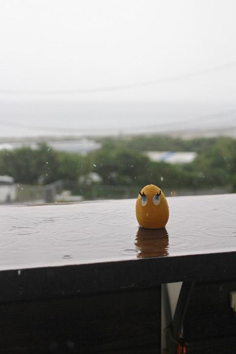 6月18日(火)雨天のため臨時休業とさせていただきます