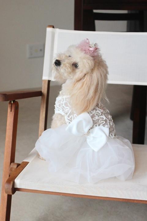 白ドレス②_1