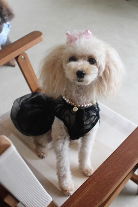 黒ドレス②_1