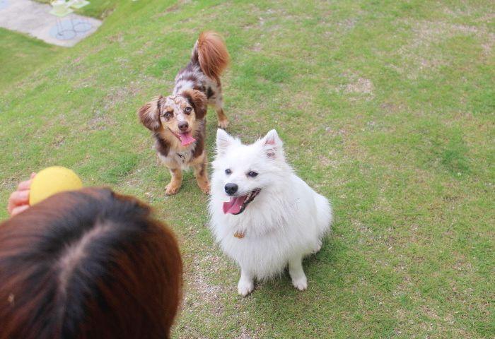 6月4日(火)ラテちゃん&モナちゃん*さくらちゃん&ヨッシー君♪♪