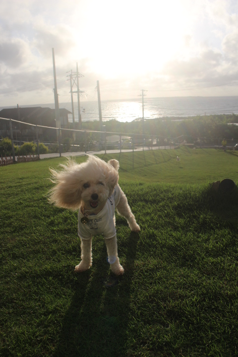 おはようございます!!強風~!!