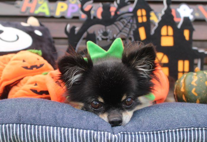 10月12日(土)★ Halloween Party ★ ご予約承り中♪♪
