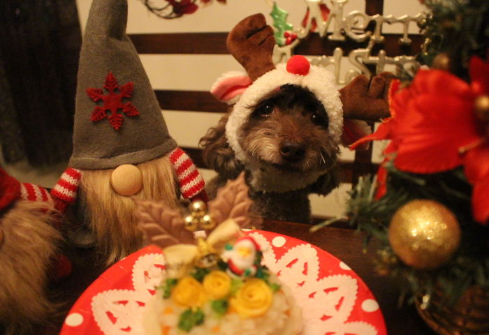 わんちゃんと一緒にクリスマスランチ☆